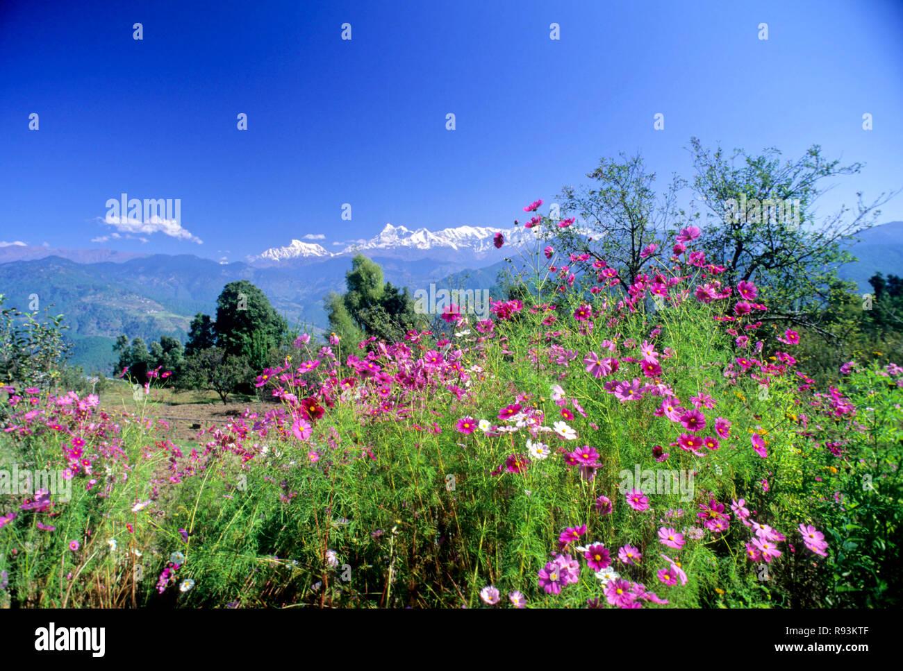 Himalaya Scape, Trishul Peaks, Gwaldam, Uttar Pradesh, India - Stock Image