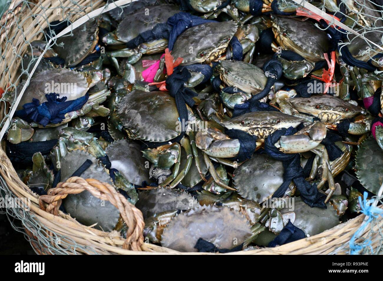 Fresh live crabs at a seafood market in Phnom Penh, Cambodia - Stock Image