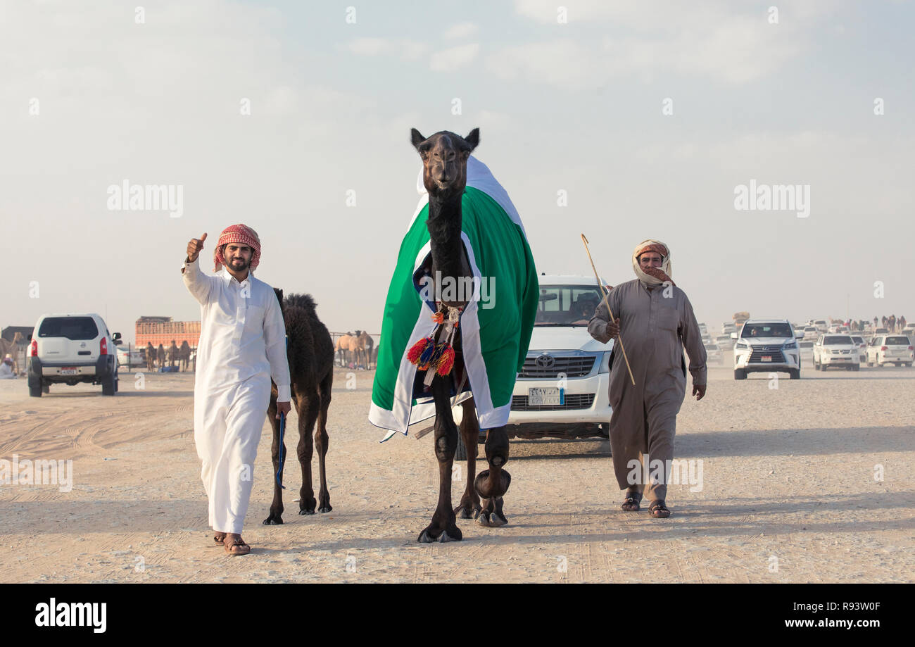 Madinat Zayed, United Arab Emirates, December 15th, 2017: arab man with his camel at The Million Street where camels get bought and sold - Stock Image