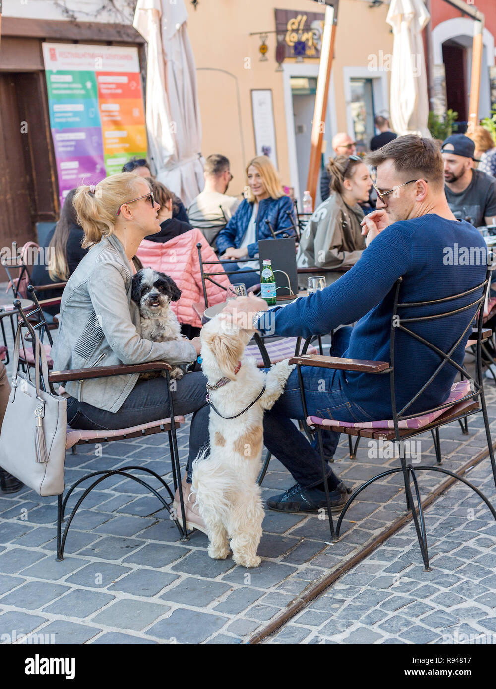 Szentendre, Hungary - April 08, 2018: Street cafe, family with dogs resting. Man's hand patting a small lap dog's head, white with red spots dog stand - Stock Image