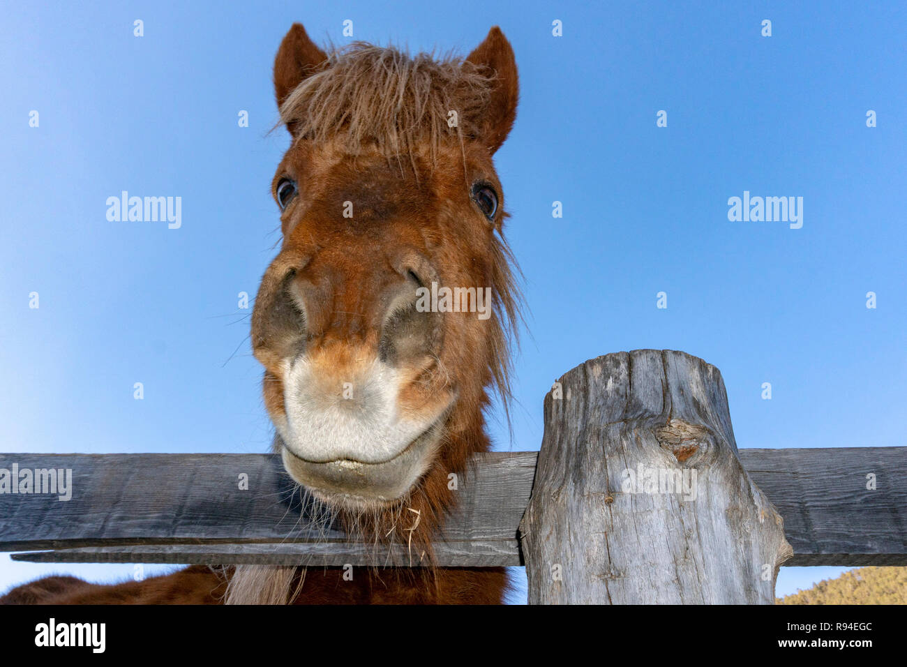 Funny Face Horse Portrait Looking At You Stock Photo Alamy