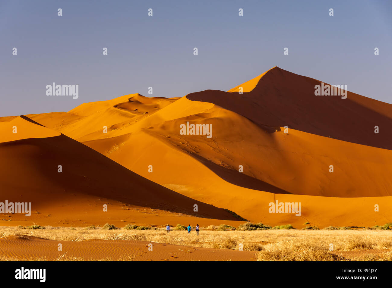 Big Daddy Dune In Sossusvlei In The Heart Of Namibia Africa