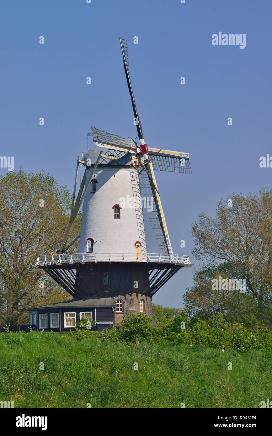 Windmill on the outskirts of the small coastal town of Veere, Zeeland, Holland, Netherlands Stock Photo