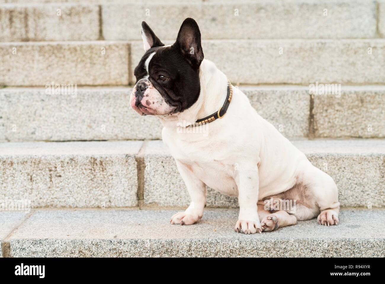 Urban scene. Dog sitting on a stairs in the street. Stock Photo