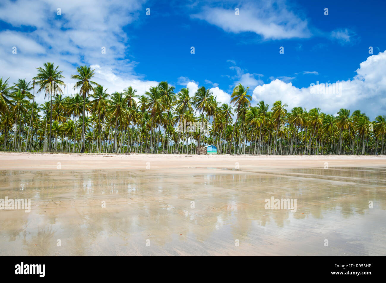 Scenic palm-fringed view of a wide empty beach reflecting tropical clouds on a rustic beach on a remote island in Bahia, Brazil - Stock Image