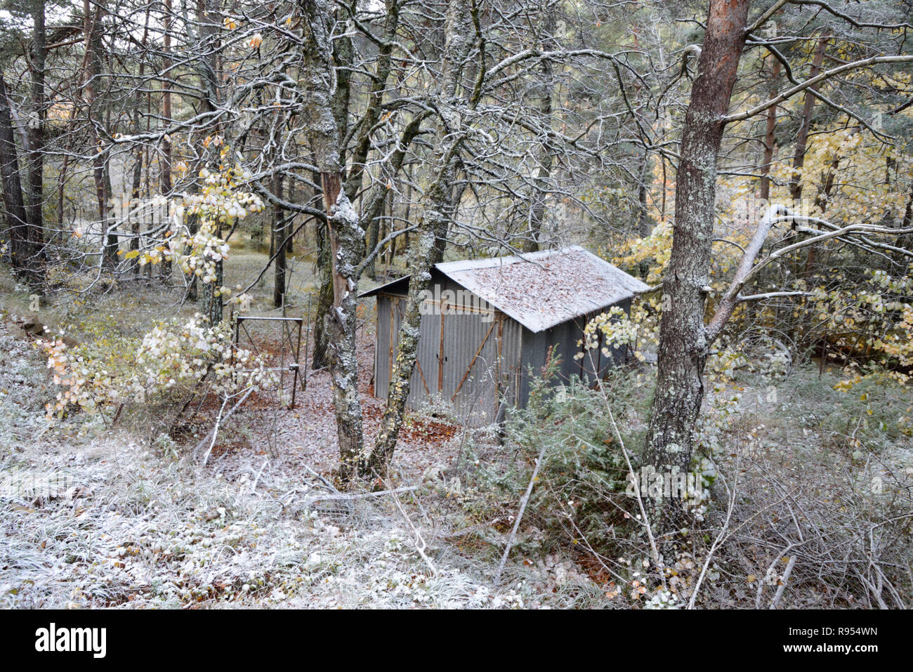 Corrugated Iron Hut in Frosty Forest - Stock Image