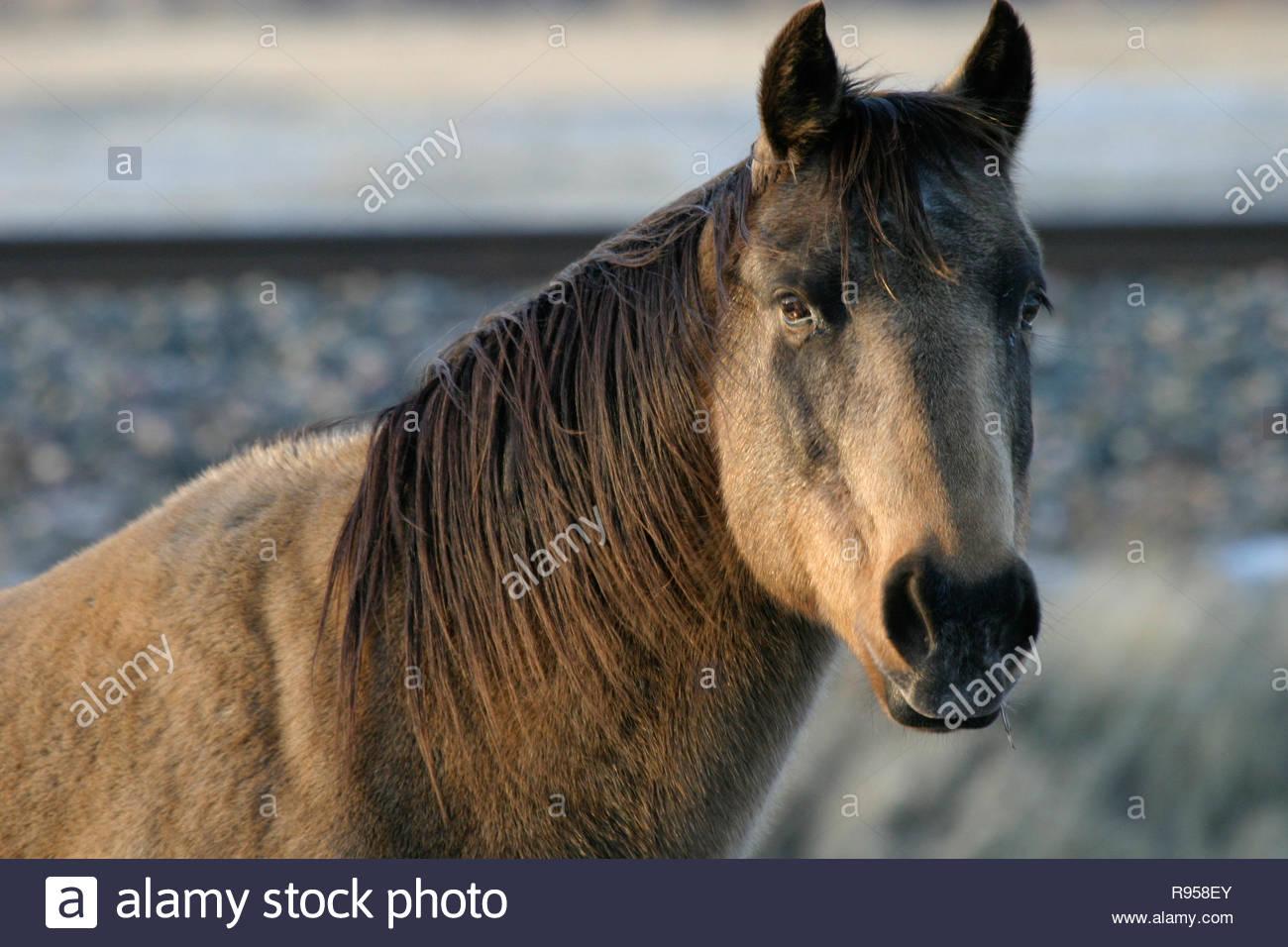 Horse, Livingston, Montana, USA - Stock Image