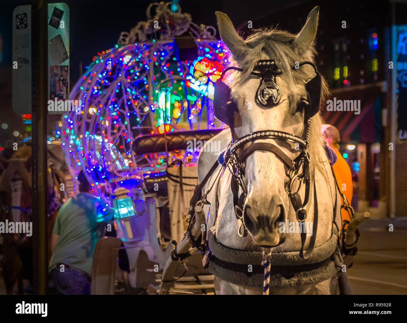 A carriage horse rests while waiting for the next customer on Beale Street, Sept. 5, 2015, in Memphis, Tennessee. - Stock Image