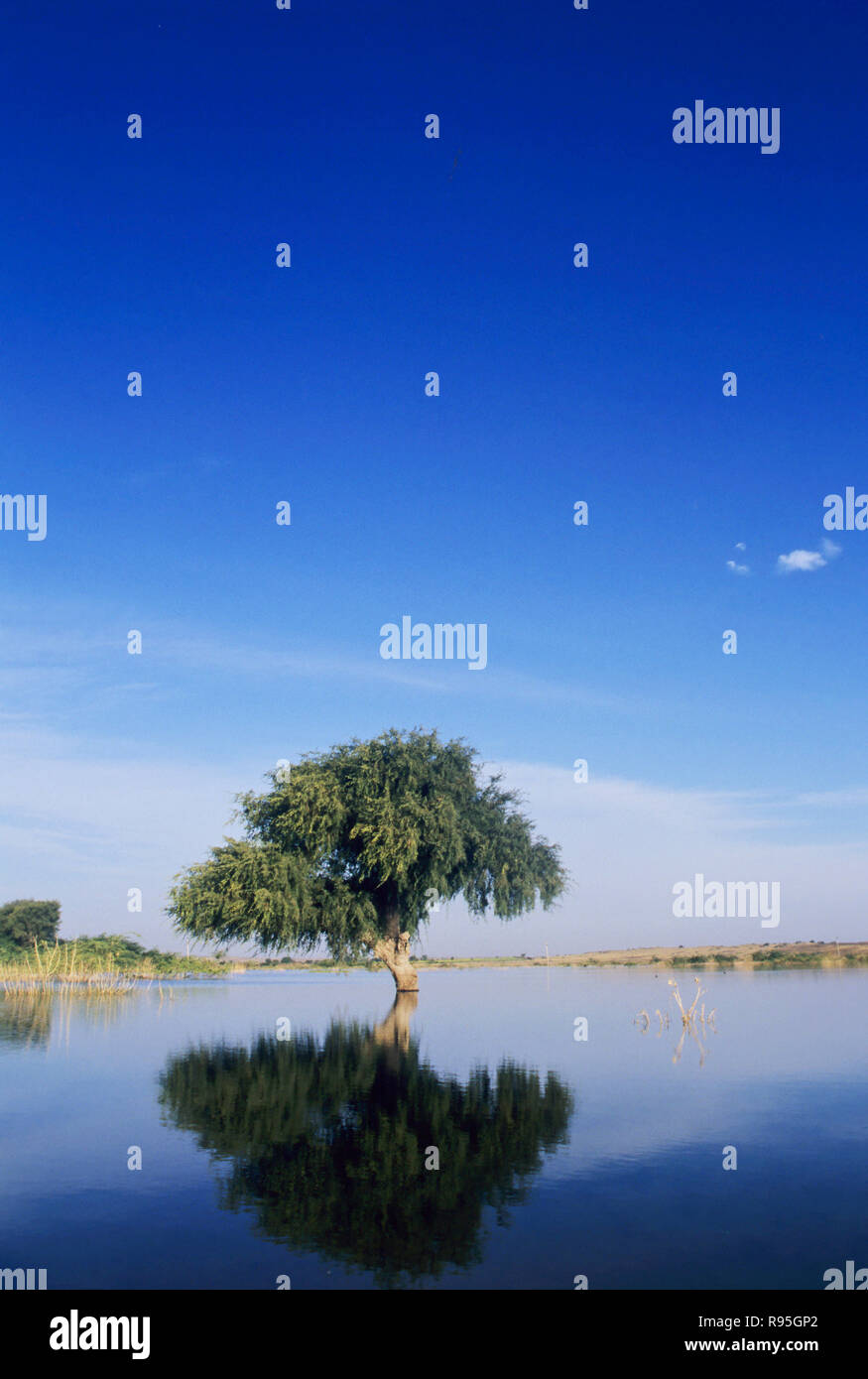 Single tree - Stock Image