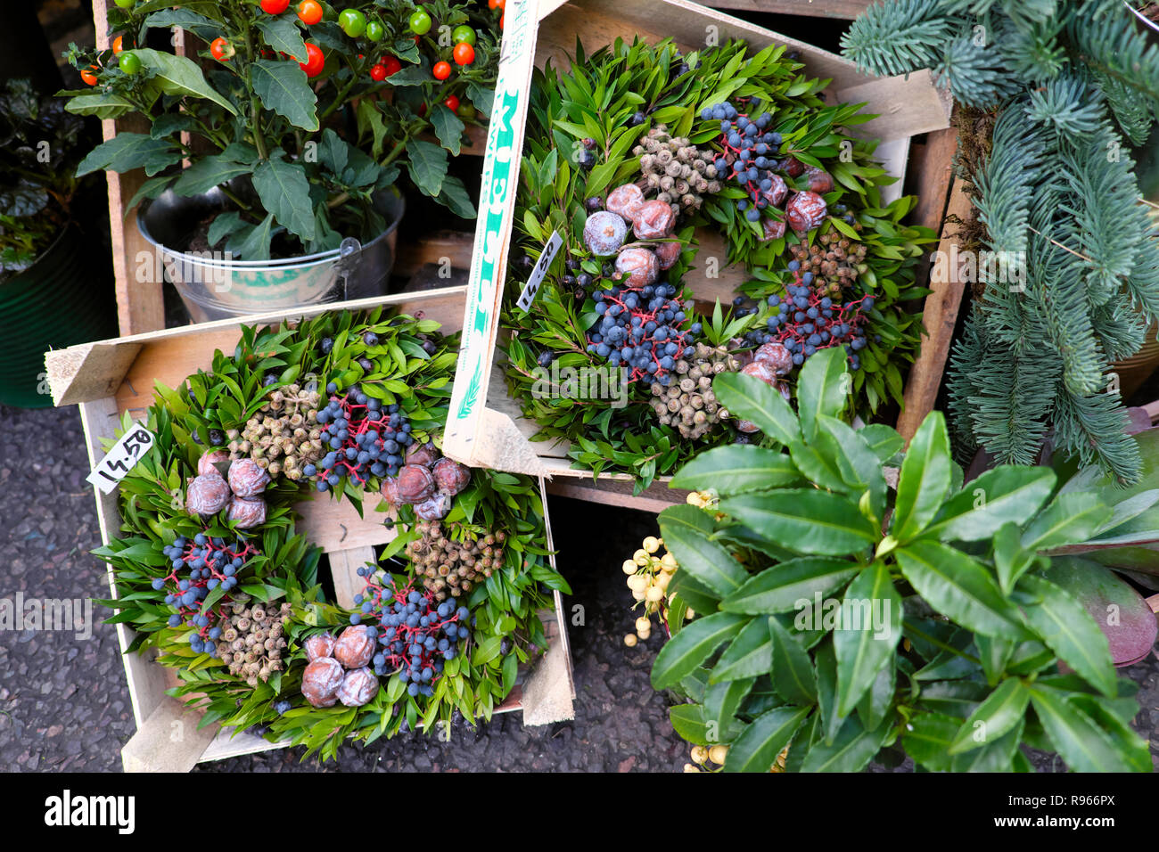 Christmas wreaths with blue berries on plant with red stems and nuts for sale on a garden stall at Borough Market in London England UK  KATHY DEWITT Stock Photo