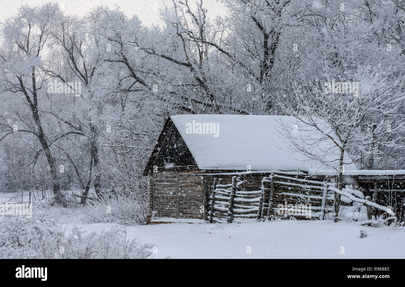 Old wooden shed during a snowfall - Stock Image