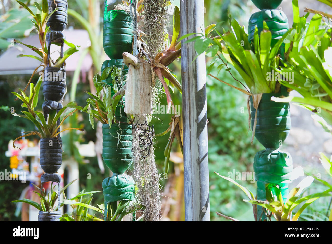 Plant Growing Vertically In Recycled Plastic Bottle Vertical