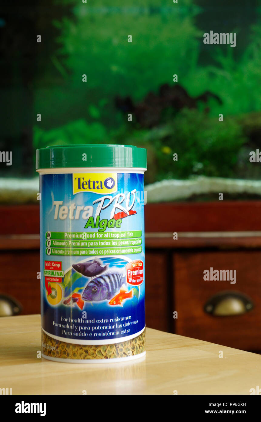 Tetra Pro Algae Pet Fish Food Flakes In Front of An Aquarium or Fish Tank, UK - Stock Image