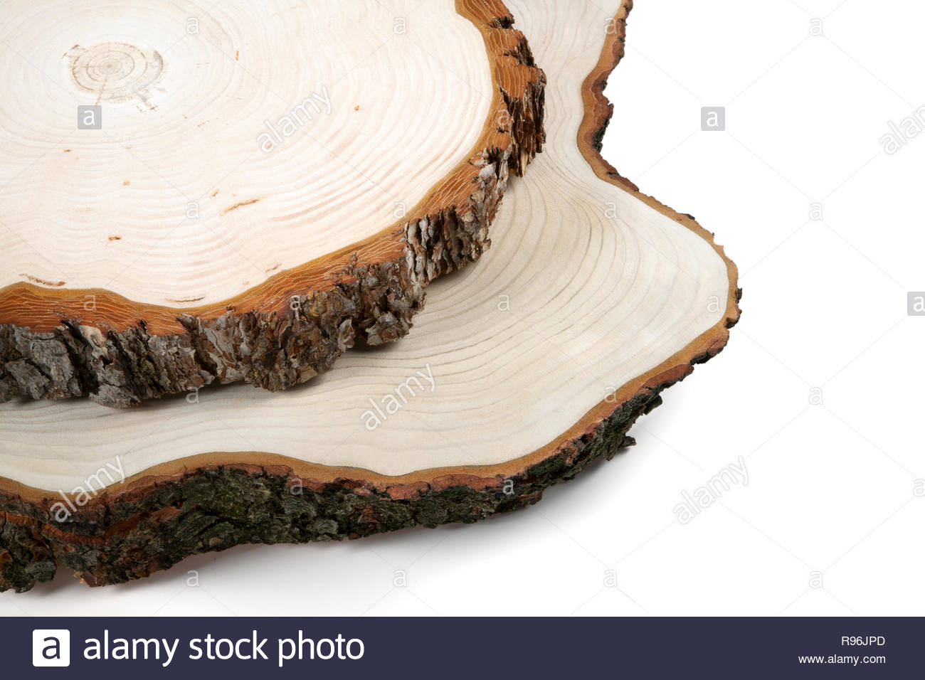 Woden cut texture. Cut of tree isolated on white. Nature abstract background. Stock Photo