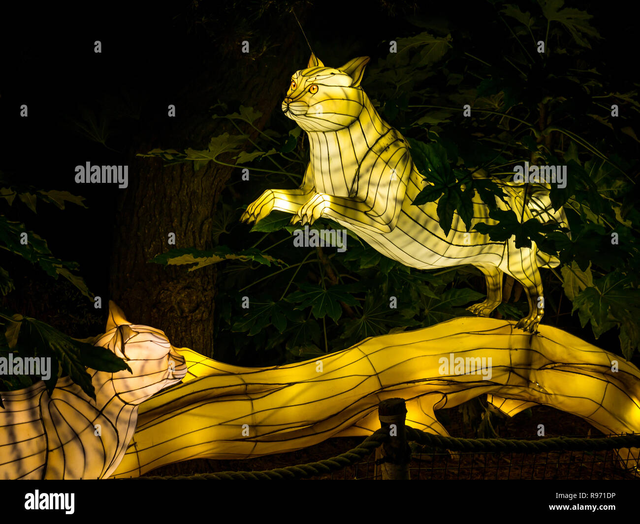 Edinburgh Zoo Scotland United Kingdom 20th December 2018 Great Lanterns Of China Display At The With Colourful Lantern Displays