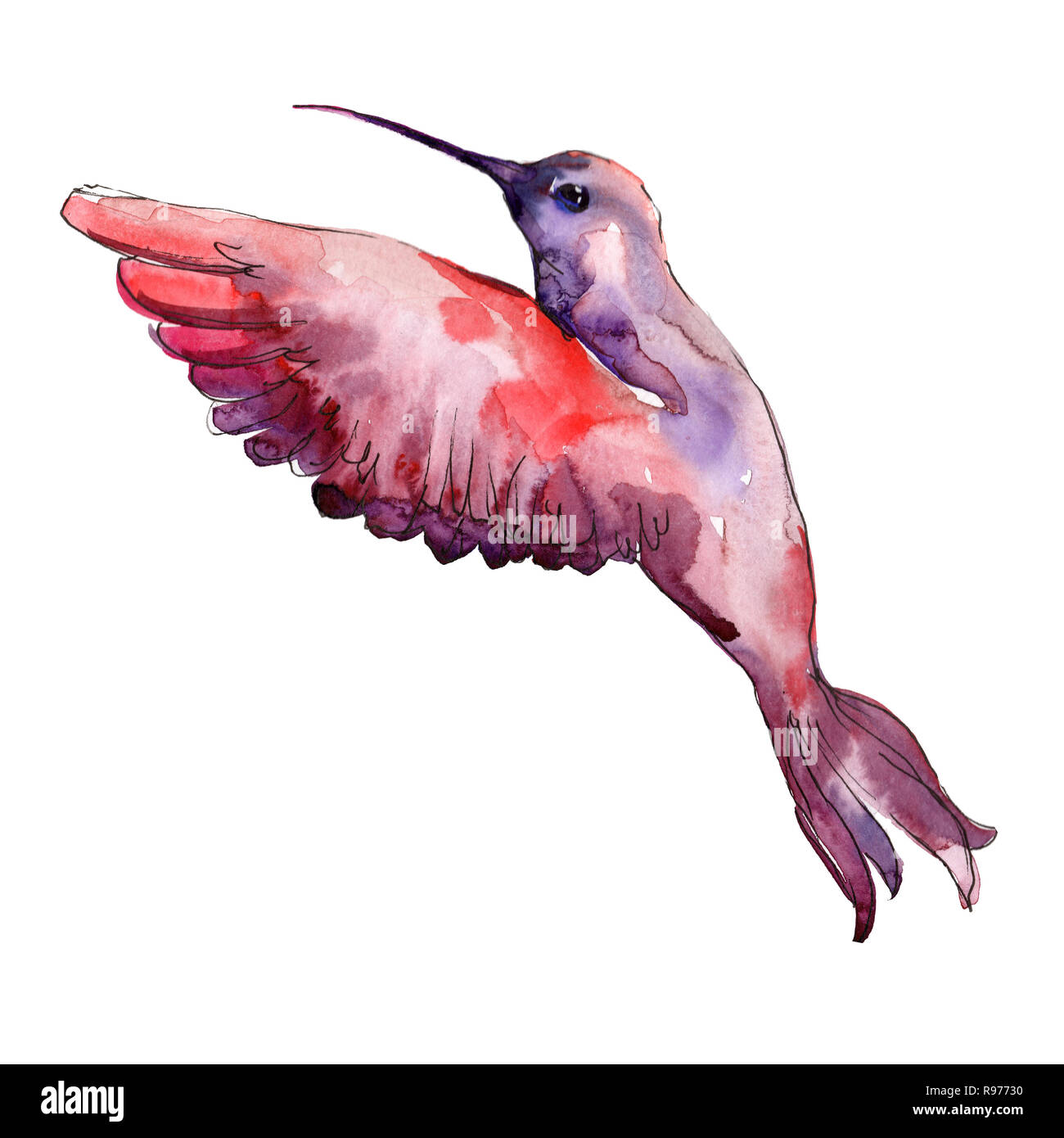 Hummingbird Wallpaper Cut Out Stock Images Pictures Alamy