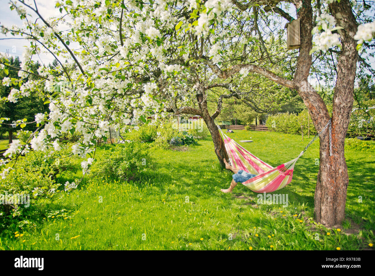 Mid adult man resting on hammock in Heinola, Finland - Stock Image