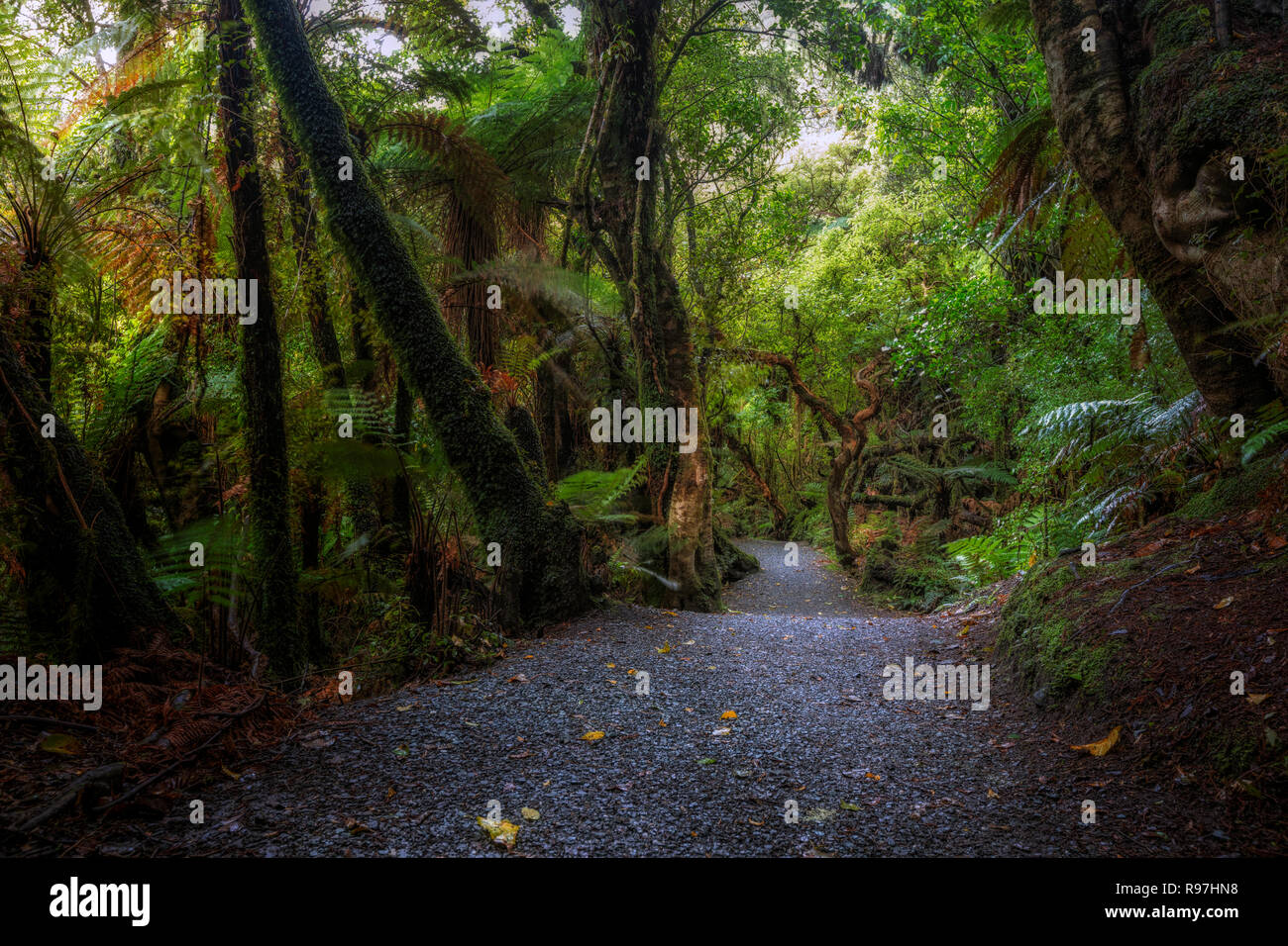 Catlins Forest Park, South Island, New Zealand Stock Photo