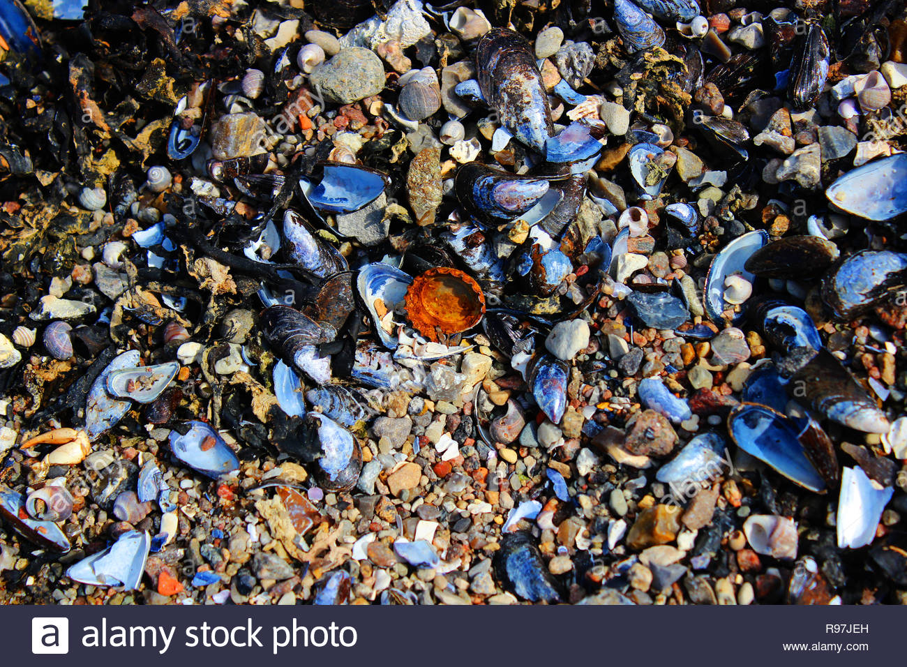 rusty bottle cap on the beach trash - Stock Image