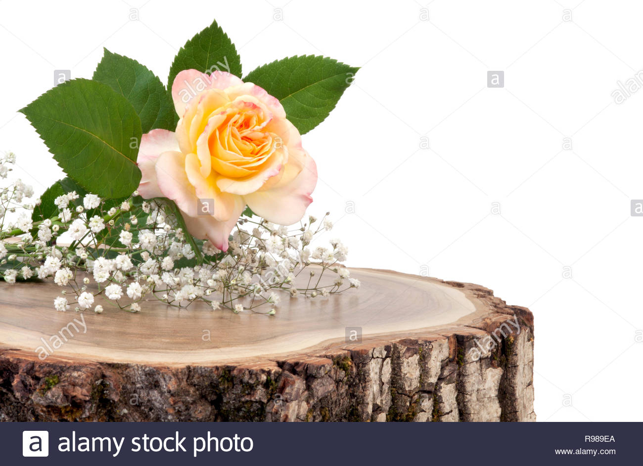 Decorative flower on fresh cut tree trunk. Decorative background for festive occasion Stock Photo