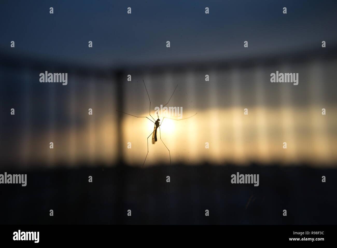 photo - Stock Image