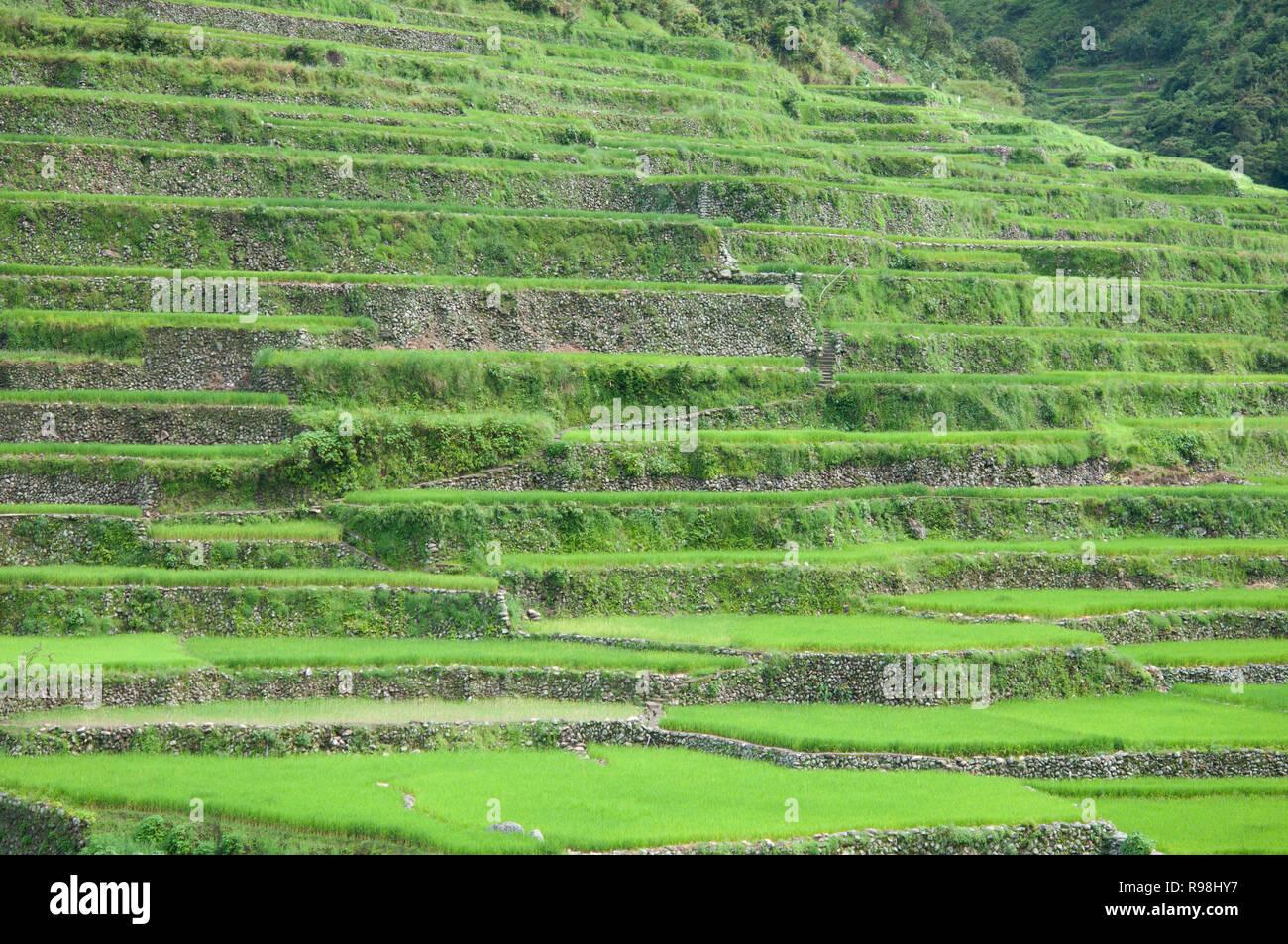 Bontoc Rice Terraces, Mountain Region, Luzon, Philippines, Asia, South Asia Stock Photo