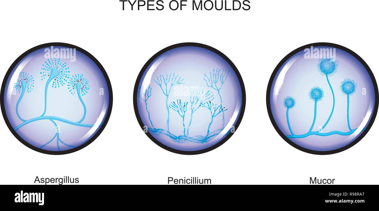 vector illustration of the types of mold - Stock Vector