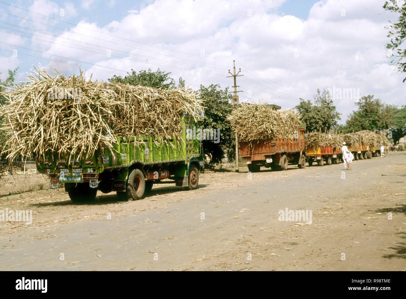 Trucks carrying sugar cane Maharashtra India - Stock Image
