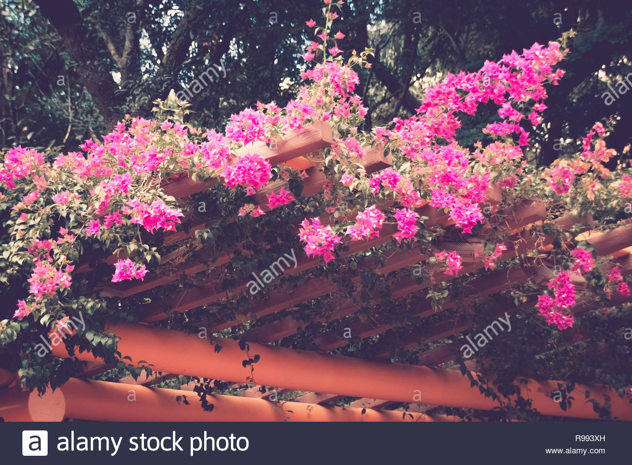 Flowers Trees And Landscape View In South Florida Stock Photo