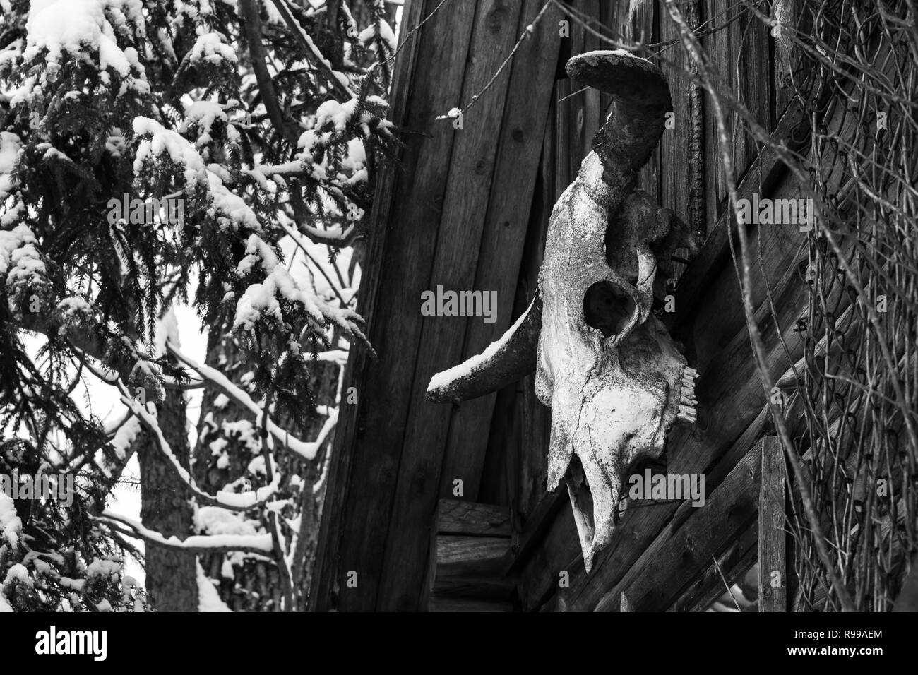 wooden small house with hanging big skull on the wall Stock Photo
