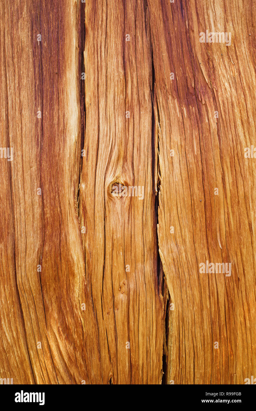 exposed reddish brown pine wood background from a high altitude tree trunk - Stock Image