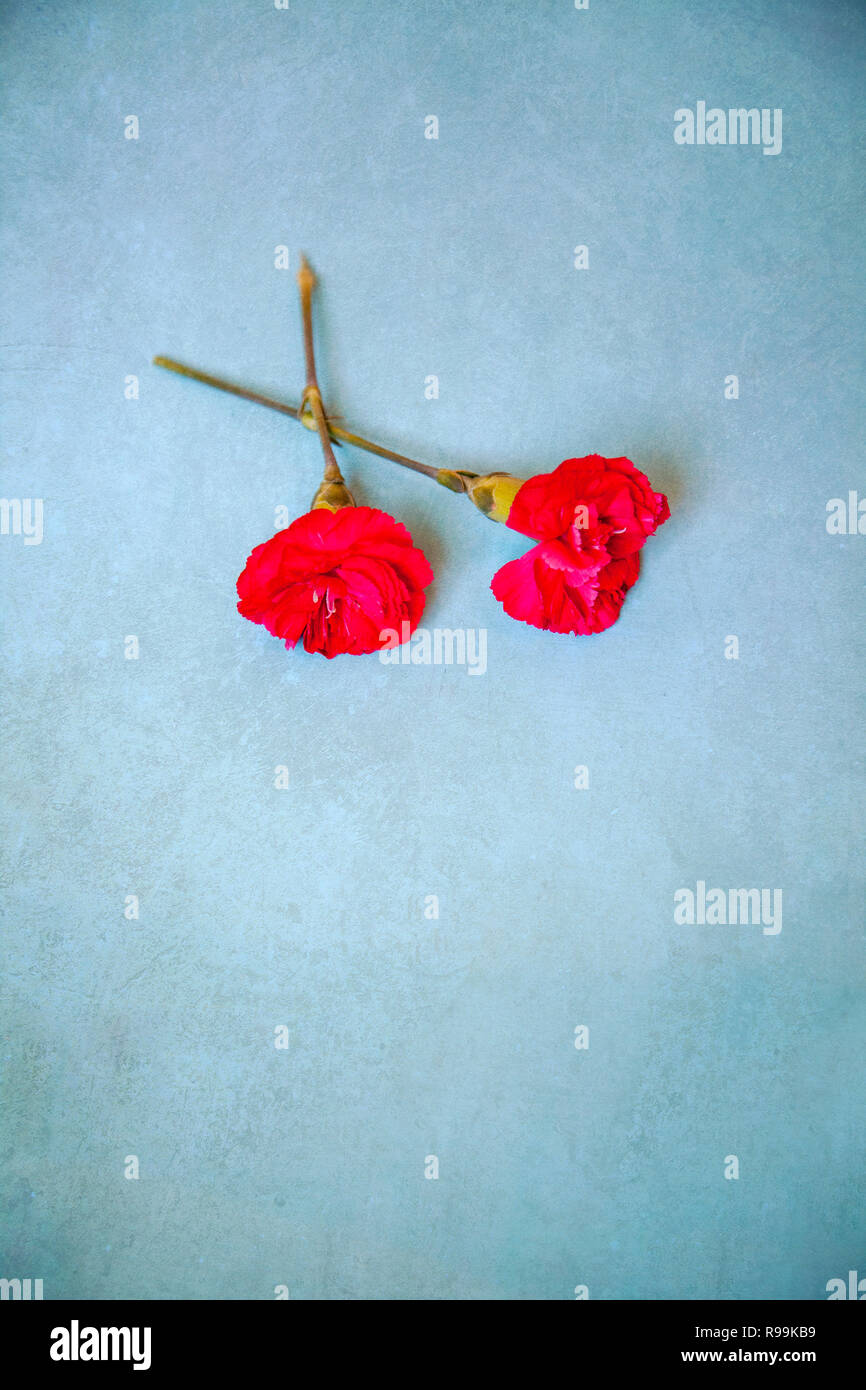 Pair red Carnation Stems - Stock Image