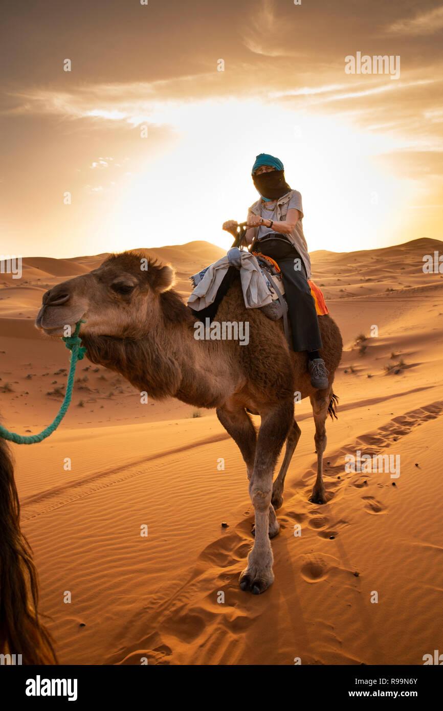 Morocco, Errachidia Province, Erg Chebbi, tourist on camel ride through sand dunes at sunset Stock Photo