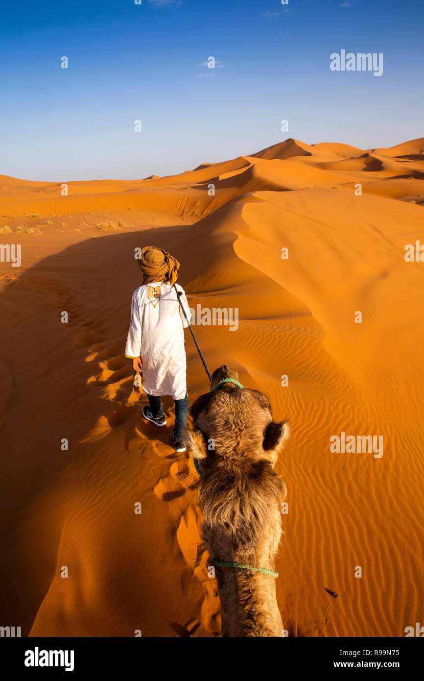 Mc645	Morocco, Errachidia Province, Erg Chebbi, sunset, view of tourist on camels ride through dunes Stock Photo
