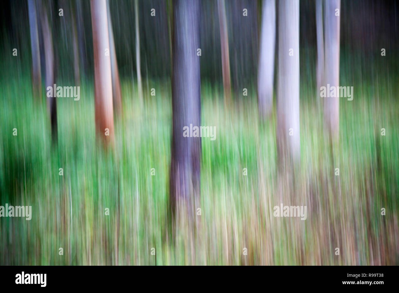 ICM Intentional Camera Movement at Strid Wood in Autumn, Bolton Abbey, North Yorkshire Dales - Stock Image