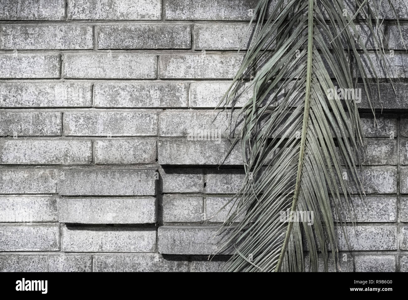 Green leaf of a palm tree on a gray brick wall background with ledges a dark grunge background - Stock Image