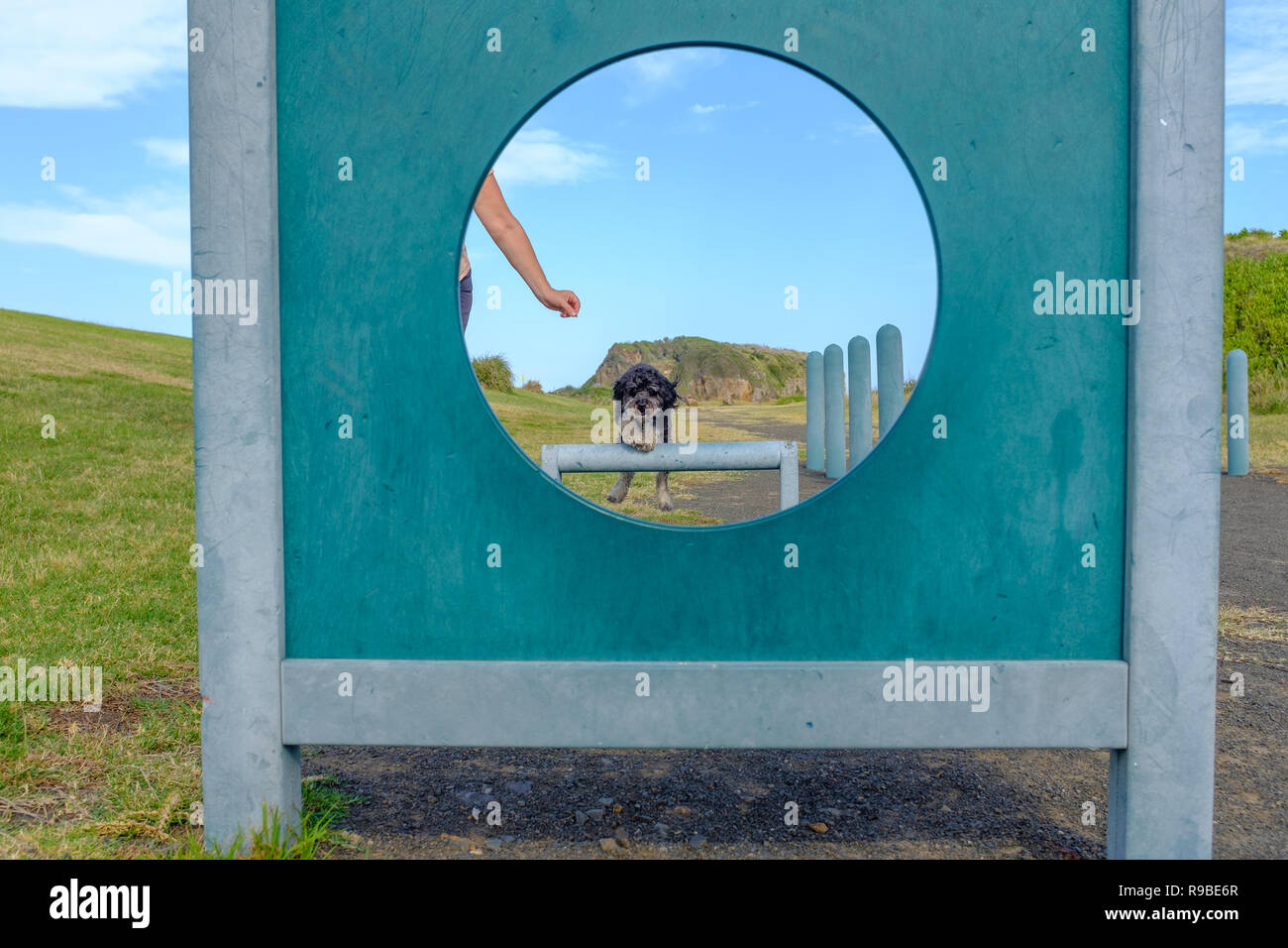 Dog training, healthy dog outside exercising jumping over a jump through hoop at dog agility park with dog trainer or owner - Stock Image