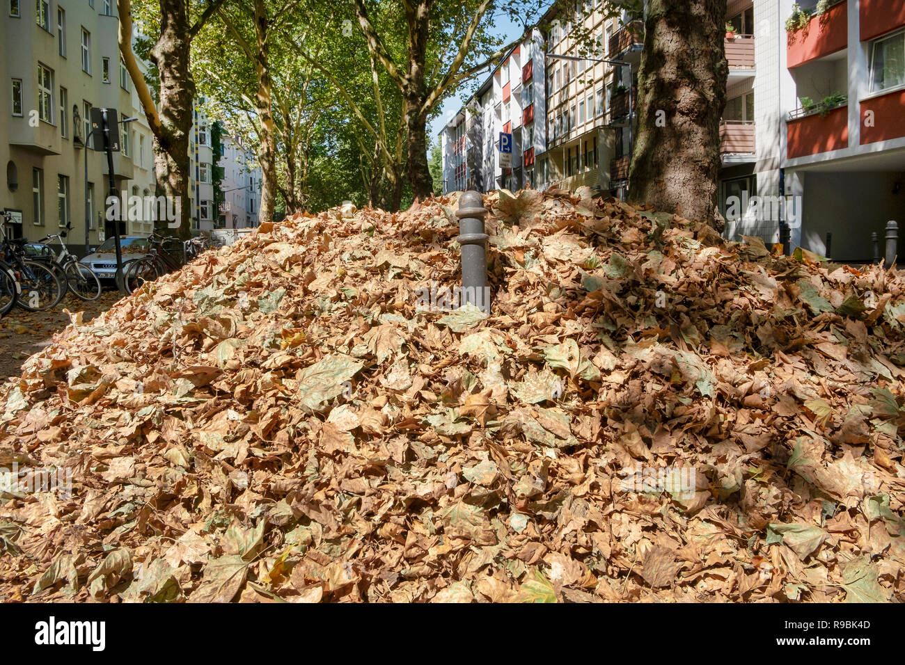 Autumn in August. In the extremely hot summer of 2018 Stock Photo