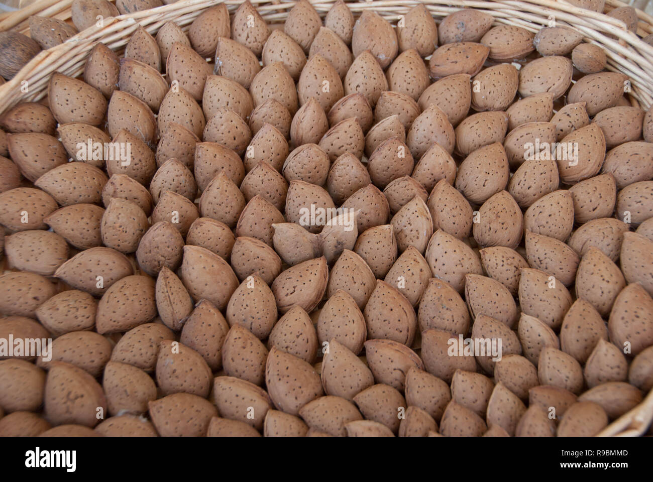 Toritto Almond, Slow Food Presidium, Puglia - Italy - Stock Image