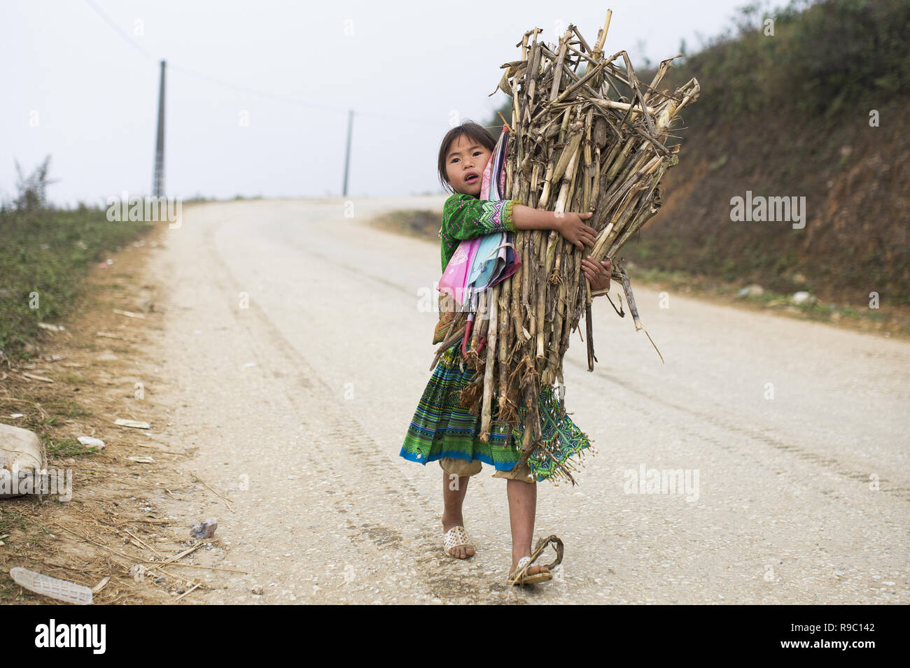 A girl of Hmong ethnicity is carrying some reeds collected on the hills of the beautiful Sa Pa in Vietnam. - Stock Image