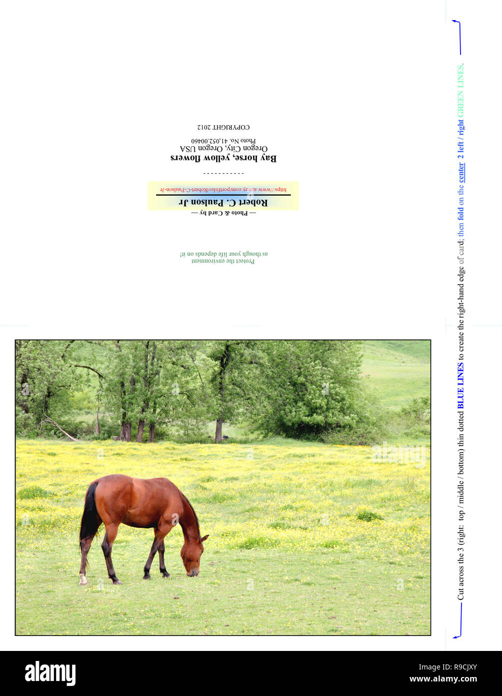41,052.00460 Photography Note Card (print cut fold for 7x5 photo card), brown horse, yellow flowers green pasture, trees bkgr, slight hill & valley - Stock Image