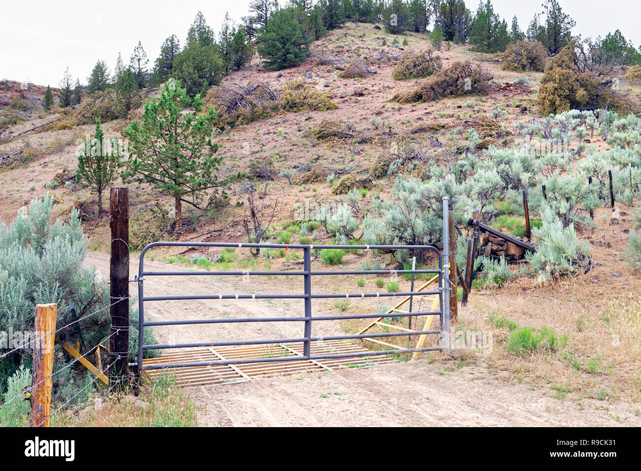 42,893.03521 metal BLM gate on a one lane dirt rural backcountry road in the high desert, standing & cut juniper trees & sagebrush, Oregon, USA - Stock Image