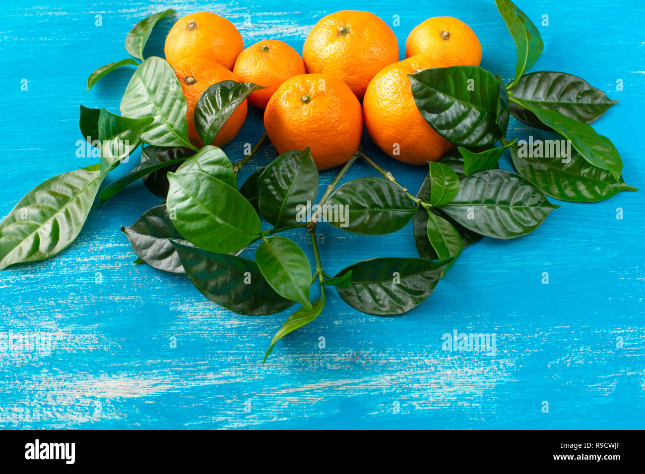 Ripe tangerines with green leaves on a bright blue background. Top view flat lay copy space - Stock Image