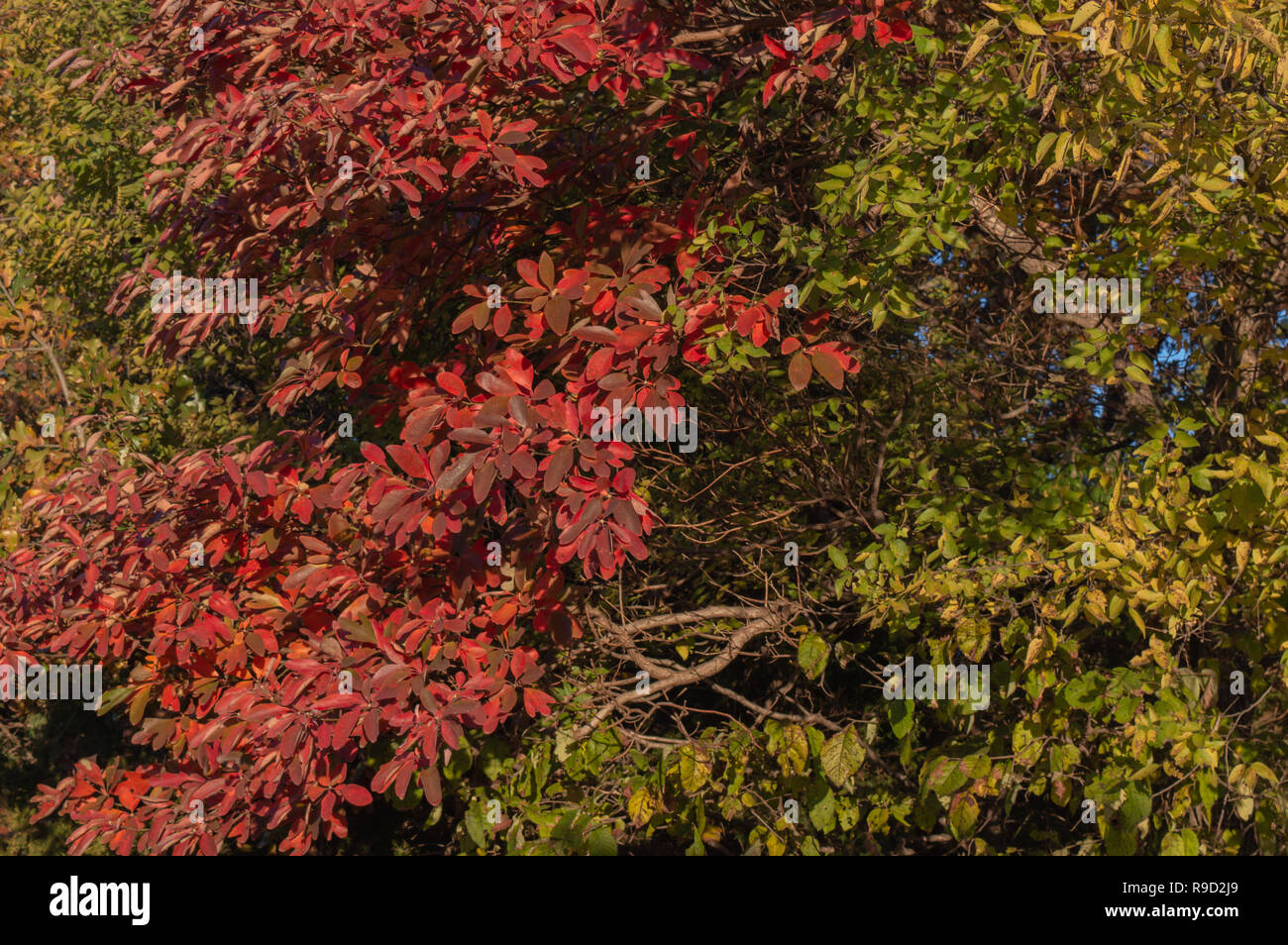 Fall Leaves Make A Pretty Background Or Texture Stock Photo