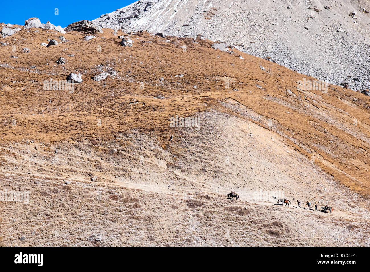 A group of traders with horses crossing a traditional trade route over a pass from Nepal into Tibet - Stock Image
