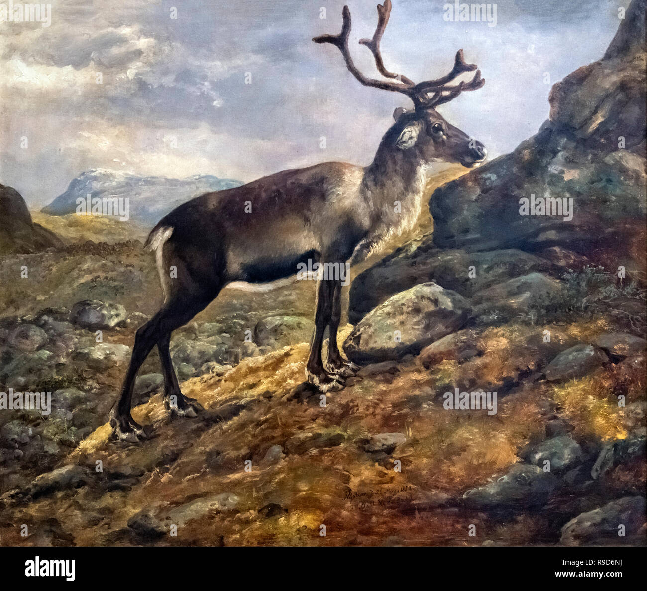 Study of a Reindeer by J C Dahl (Johan Christian Claussen Dahl: 1788-1857), oil on canvas, 1850 - Stock Image