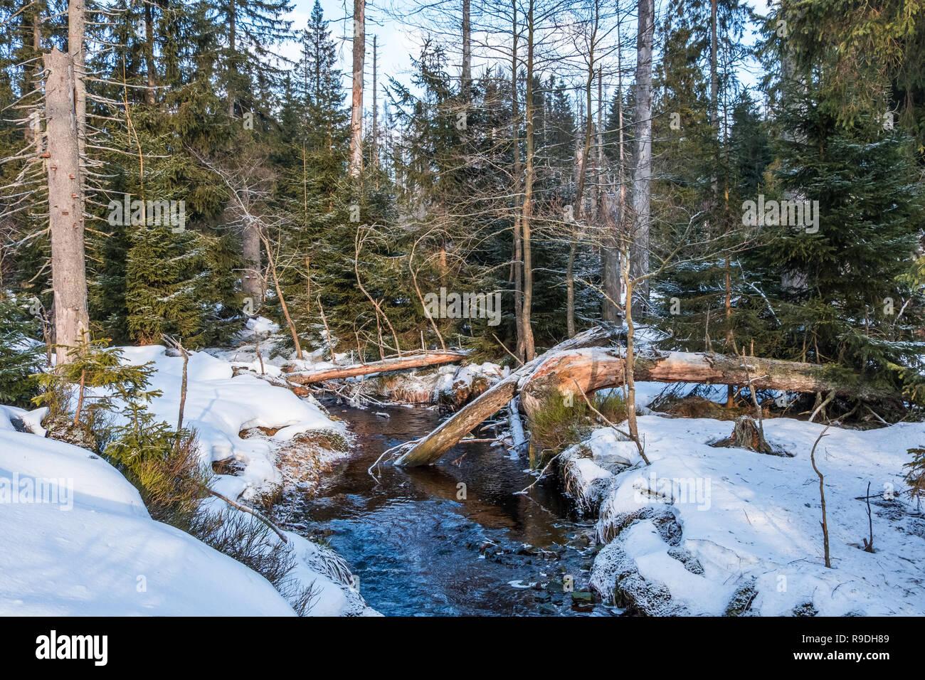 Nationalpark Harz im Winter Oderteich Stock Photo
