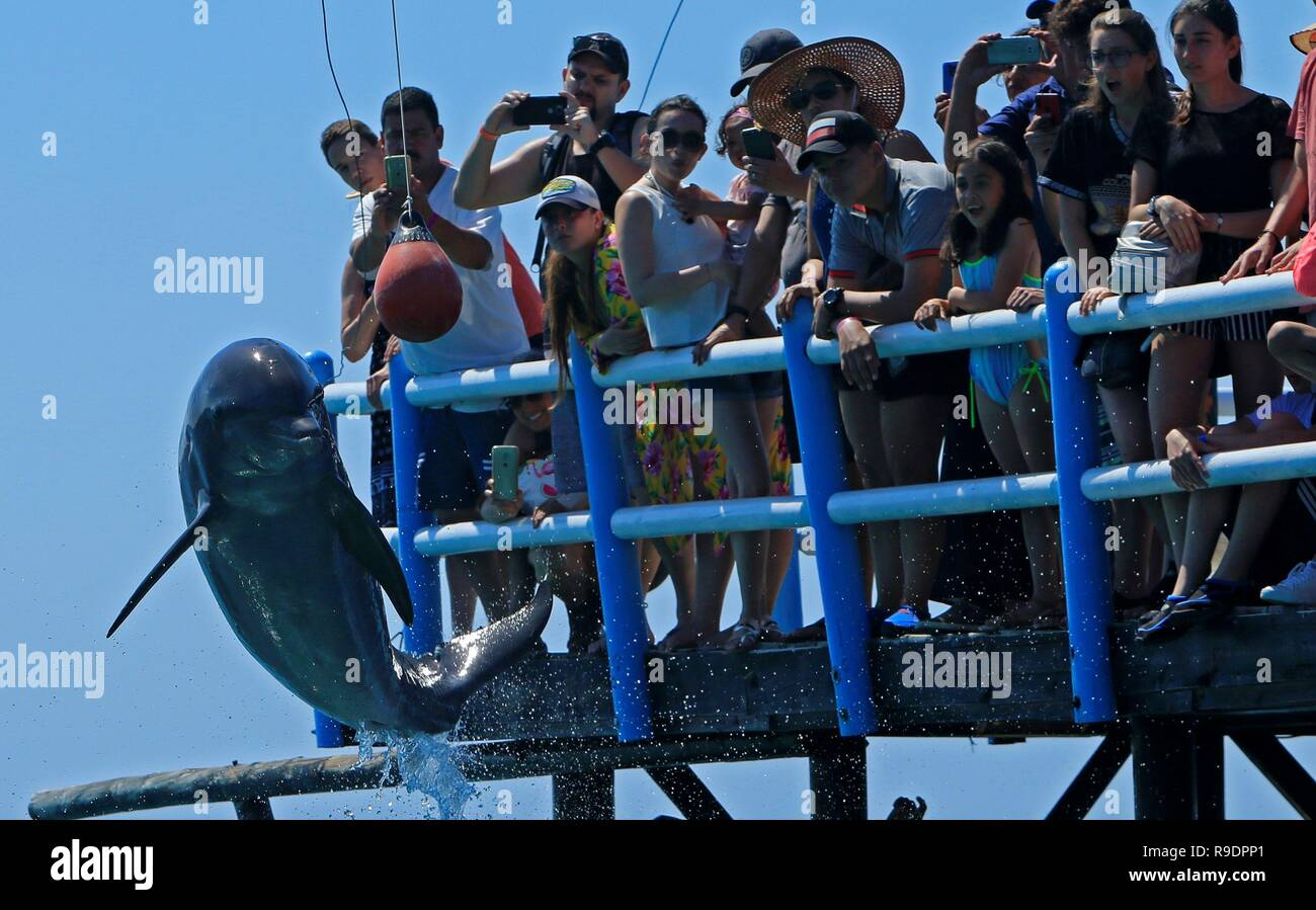Cartagena, Colombia  22nd Dec, 2018  A dolphin jumps in front of the