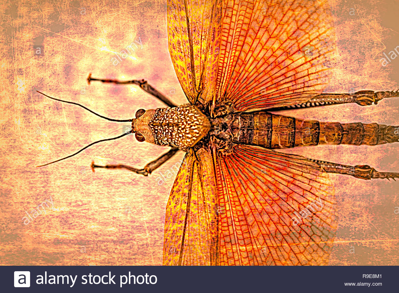 Computer Bugs Stock Photos Images Alamy Winged Insects Made From Old Circuit Boards And Electronics A Beautiful Dissected Insect Is Turn Into Art By Using Filters Tools Personal