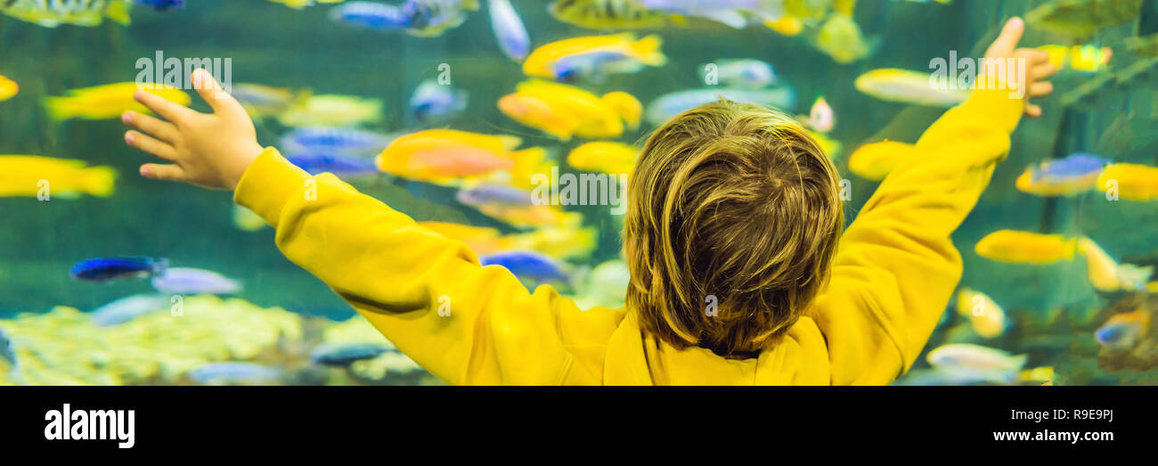 Little boy, kid watching the shoal of fish swimming in oceanarium, children enjoying underwater life in Aquarium BANNER, LONG FORMAT - Stock Image